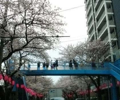 2010花見2