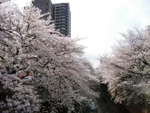 2010花見3
