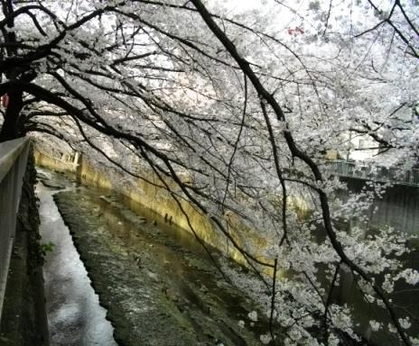 2010花見4