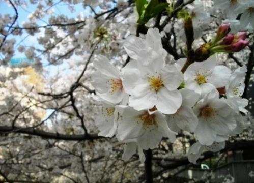 2010花見5