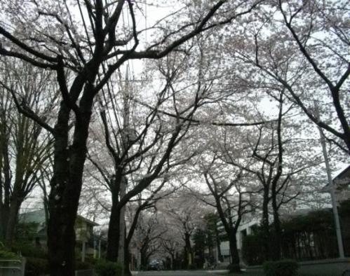 2010花見9