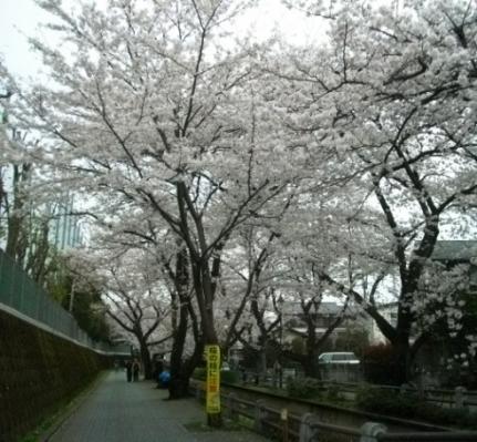 2010花見11