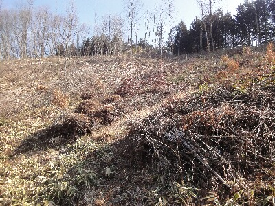 山頂のシイタケ栽培