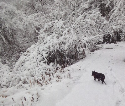 雪の奈良本林道