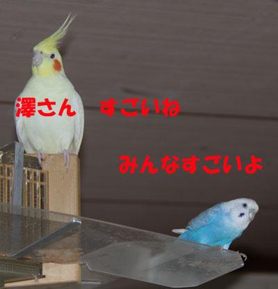 ノンちゃん
