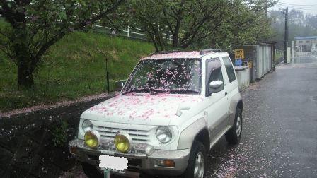 桜の落ちた車