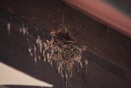 ツバメの巣 2個目①