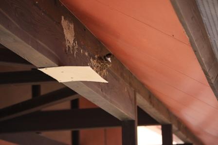 ツバメの巣 2個目②