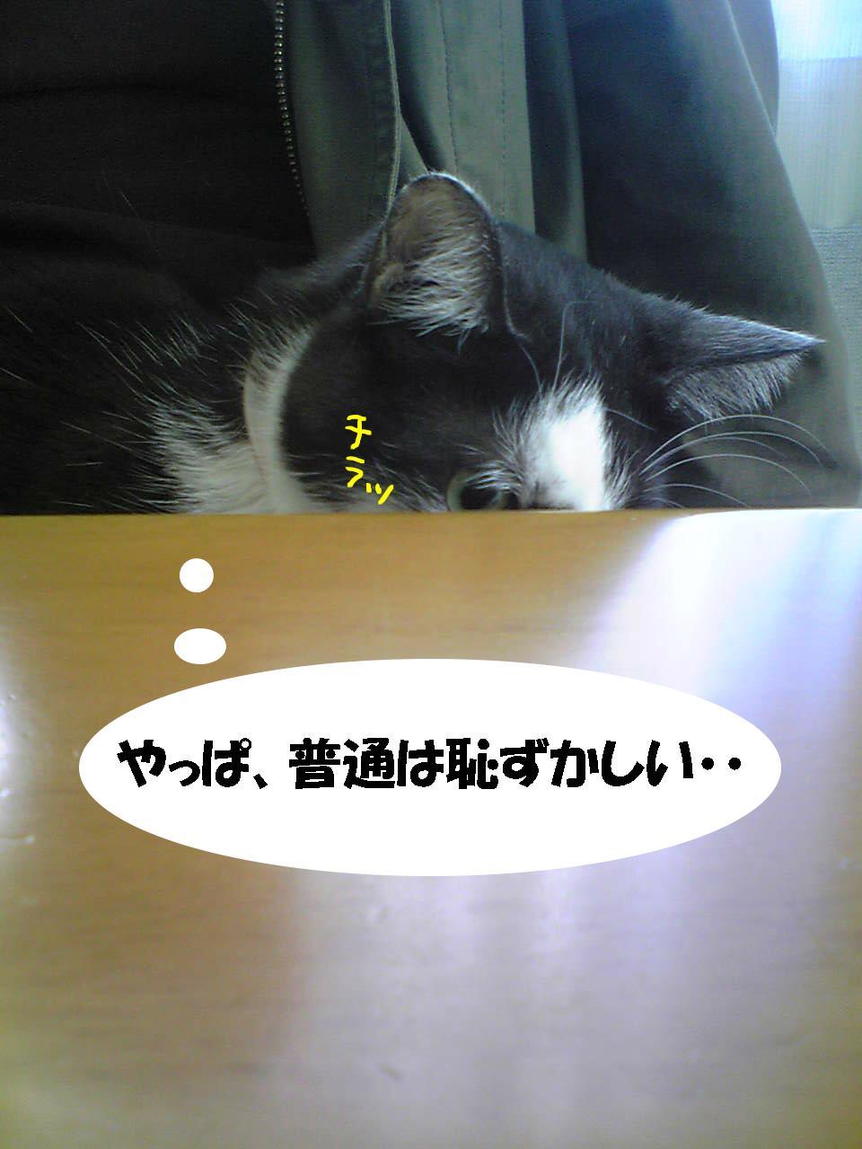 ニャンちゃん2