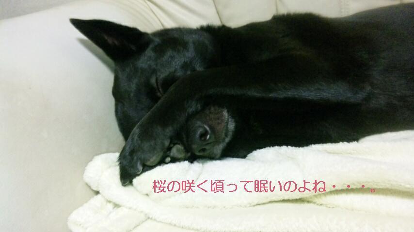眠いアリさん