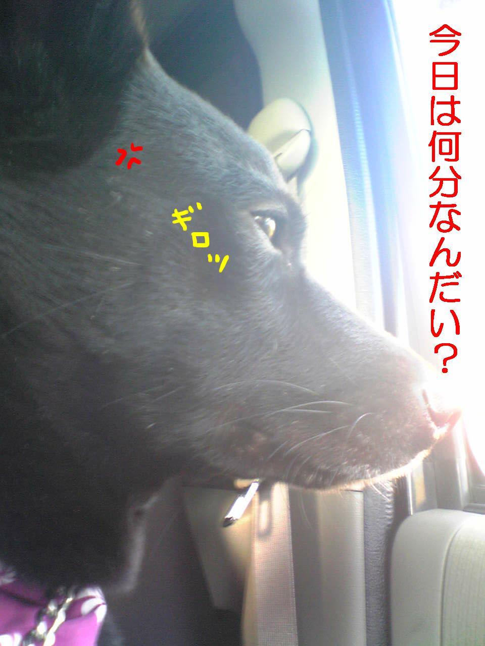 アリさん2