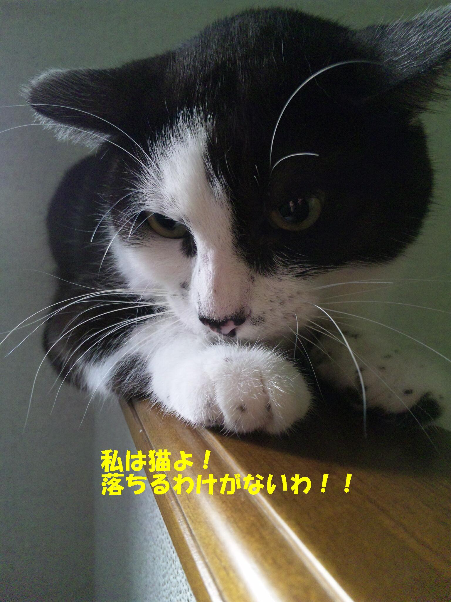 ニャンちゃん1