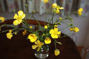 春のお花❀