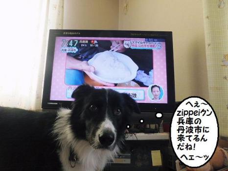 すまたん テレビ
