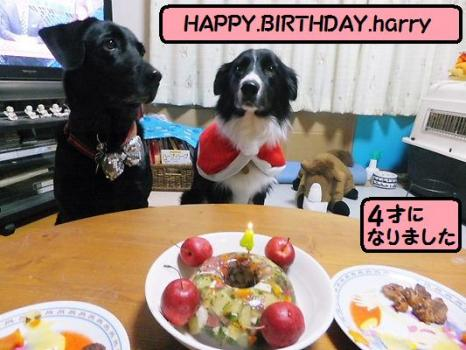ハリー お誕生日