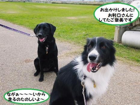 風&ハリー