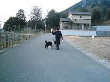別々 の 散歩