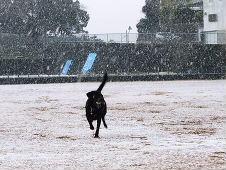 ちょこ 雪さ~ん
