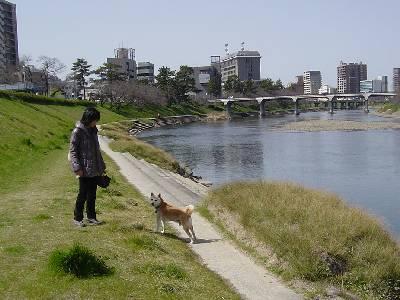 kawazusakura15_2009.jpg