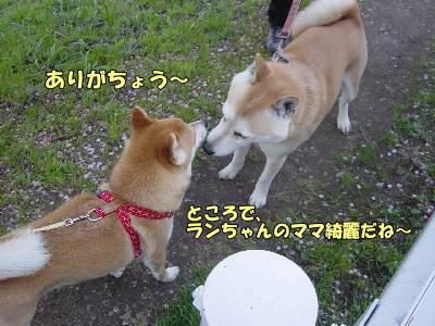 kawazusakura22_2009.jpg