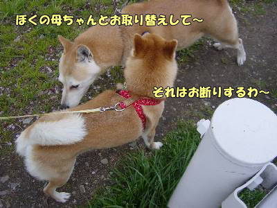 kawazusakura23_2009.jpg