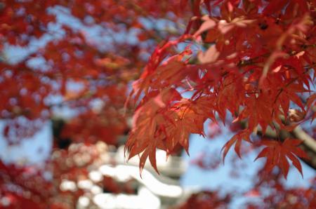 犬山城の紅葉