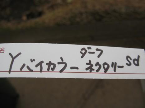 №76sdバイカラーDN2