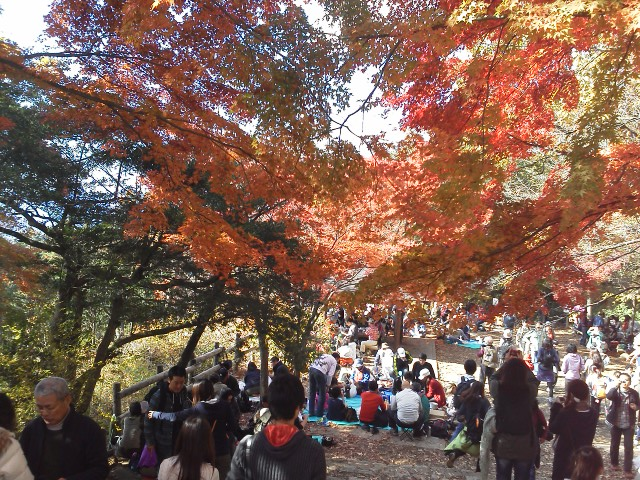 101120高尾山の紅葉