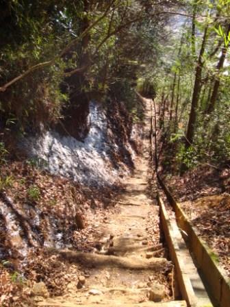 091220仙石原への下山道の霜柱
