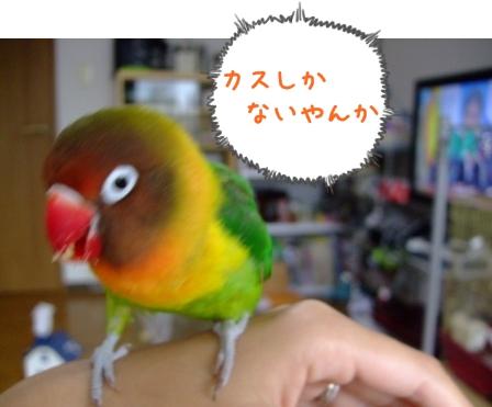 001_20101007190327.jpg