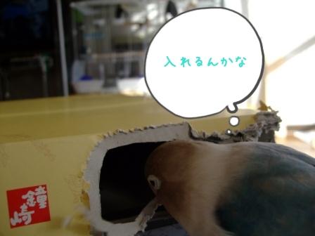 002_20110104124932.jpg