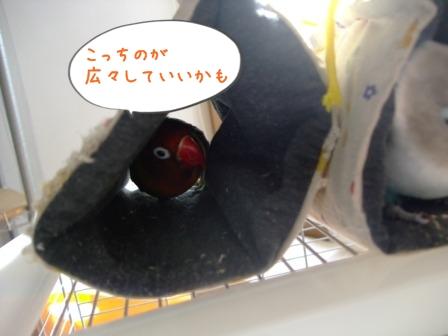 005_20101222192009.jpg