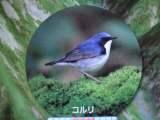 007_20100827085208.jpg