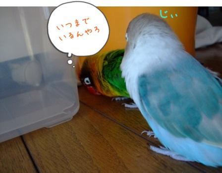 010_20100730184113.jpg