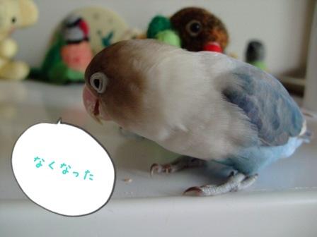 010_20100824110529.jpg