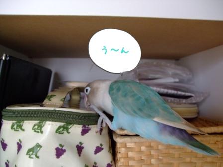 010_20101005202328.jpg