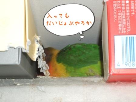 023_20110103115027.jpg