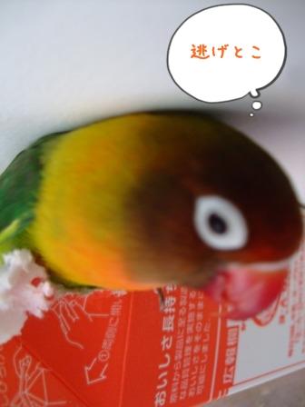 023_20110203203422.jpg