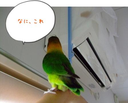 025_20100818090050.jpg
