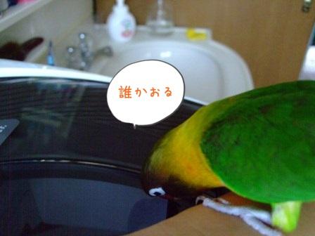 028_20100726091943.jpg