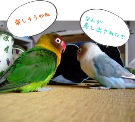 028_20100831111922.jpg