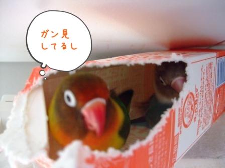 031_20110203203422.jpg