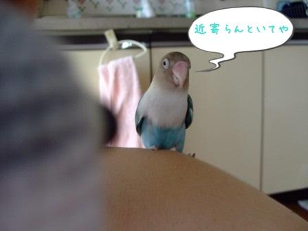 052_20100911112256.jpg
