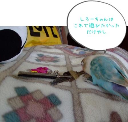 225_20100805092533.jpg
