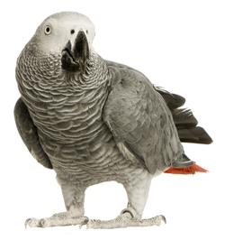 BirdBreed_2_116_1.jpg