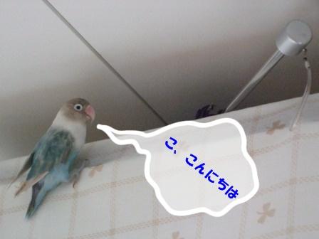 eakon2.jpg