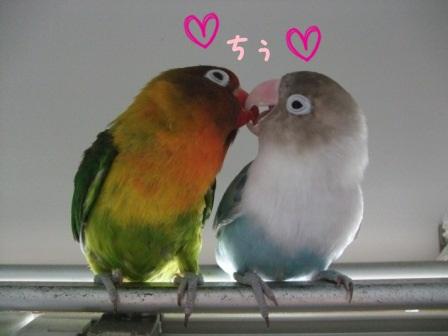 lovebird3.jpg