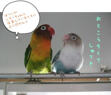 lovebird4.jpg
