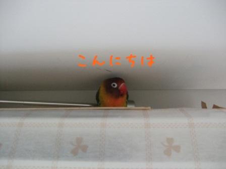 lovebird5.jpg