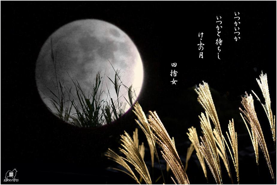 15夜合成